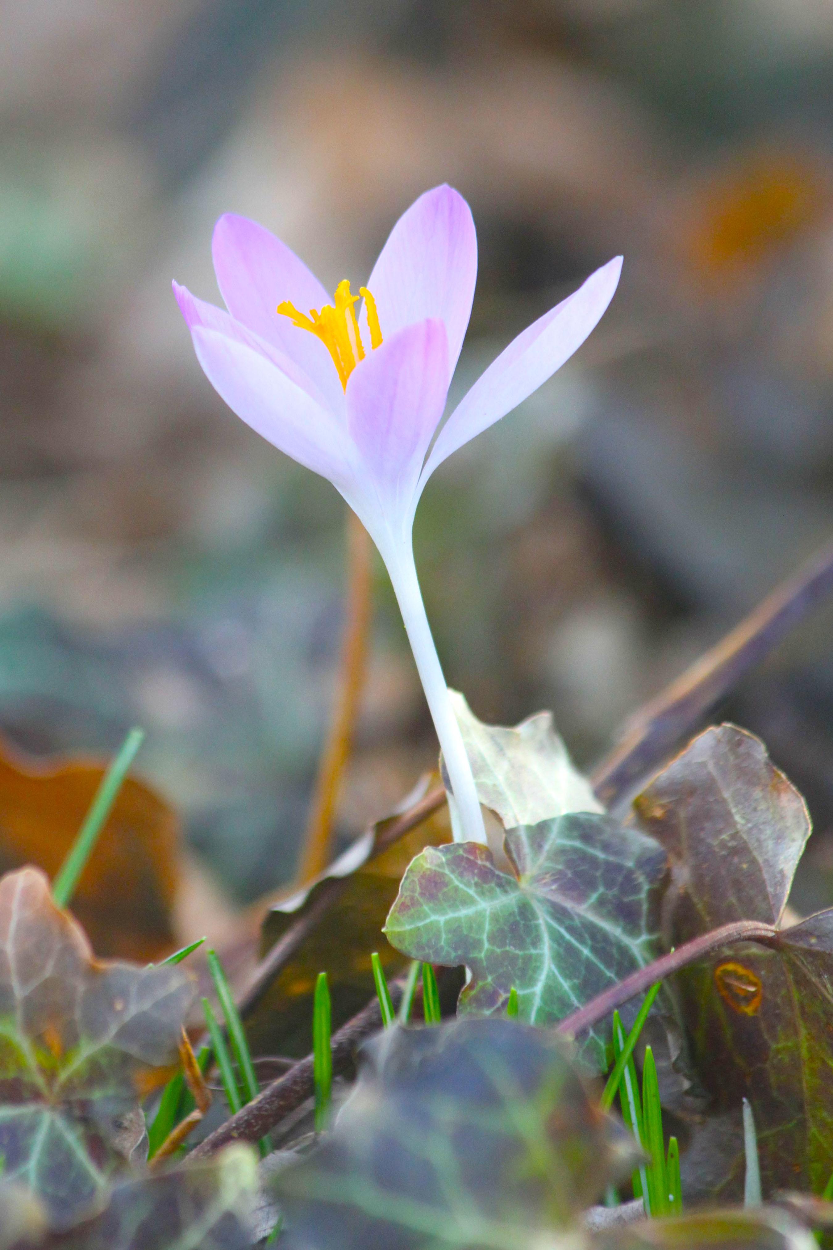 A flower seen on that Wednesday evening. Lucky me.